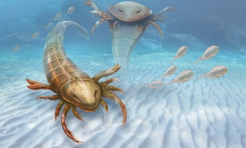Fossilized Human-Sized Sea Scorpion Found In Meteorite Crater