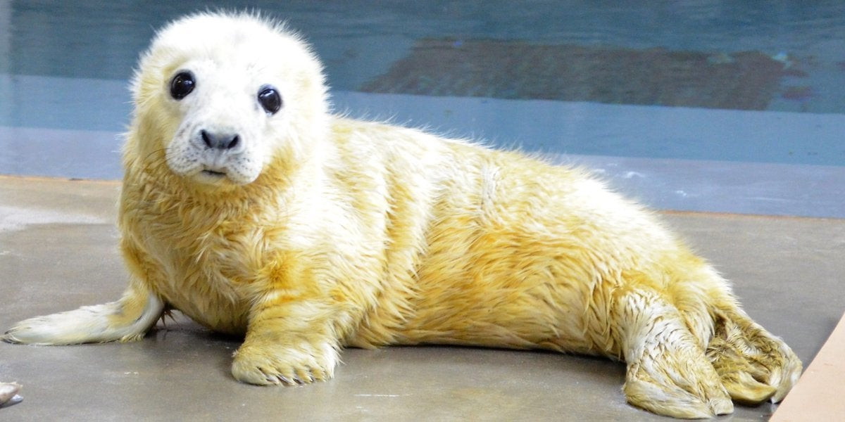 The cutest animals on Twitter, Boeing's new spacesuit, and other amazing images of the week