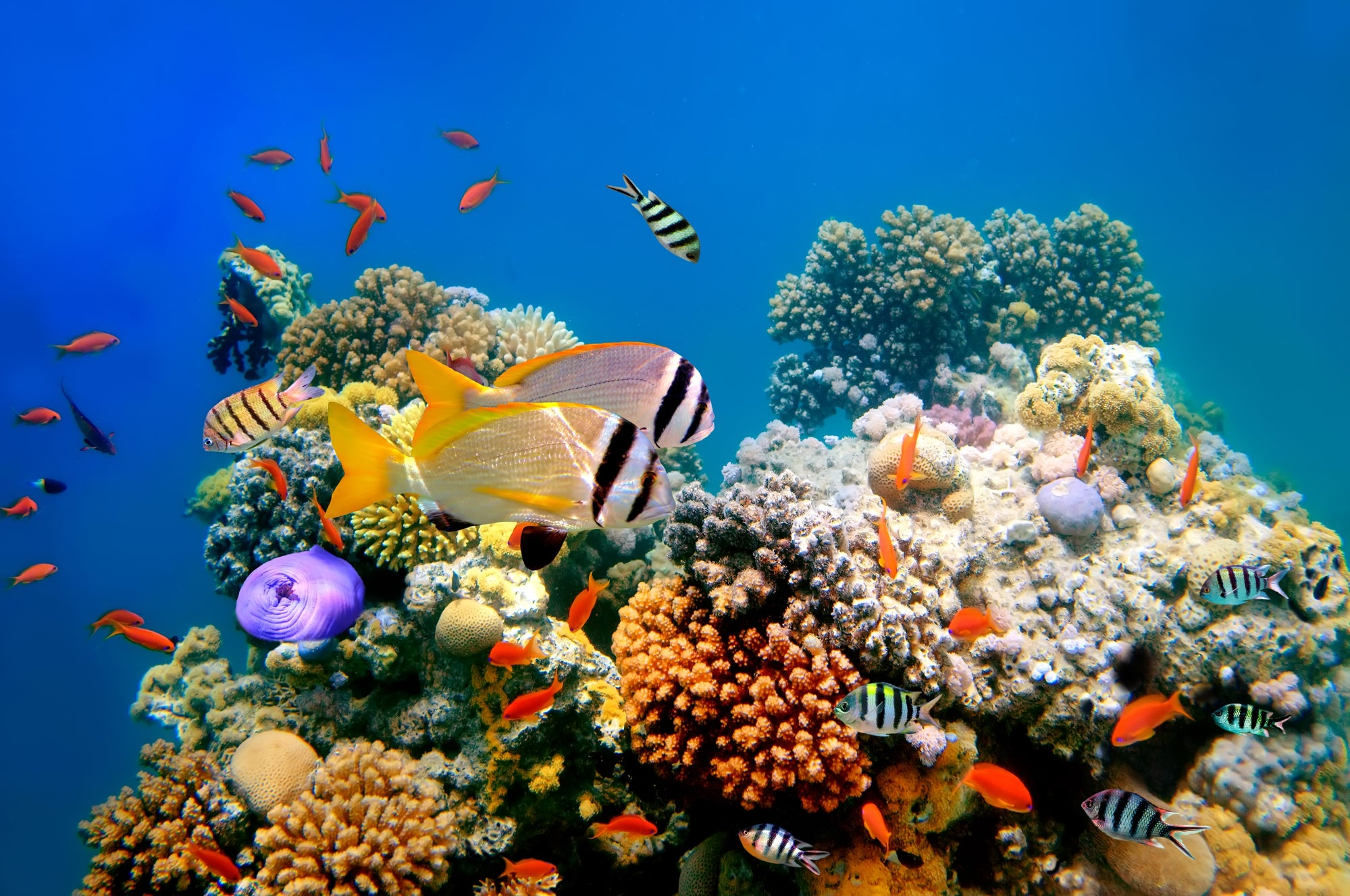 We can save coral reefs by putting them on ice
