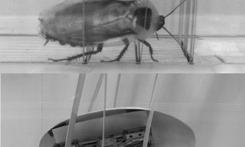 Watch A Robotic Roach Learn To Tuck And Roll