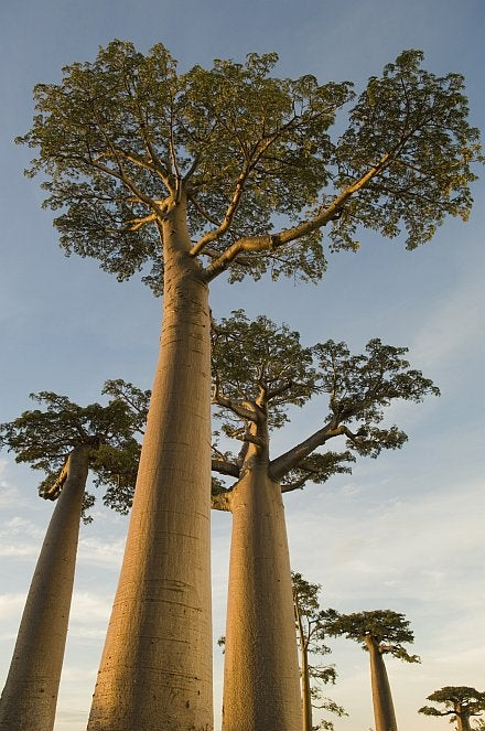 Synthetic Tree Soaks Up Carbon 1000x Faster Than the Real Thing