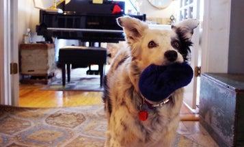 I Met The World's Smartest Dog