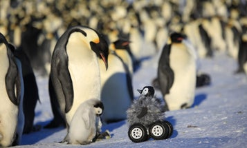 Antarctic Scientists Infiltrate Penguin Huddles With Adorable Remote-Controlled Car