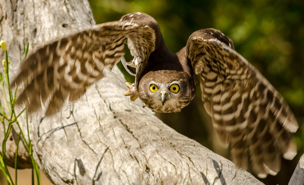 Coating Inspired By Owl Wings Quiets Wind Turbines