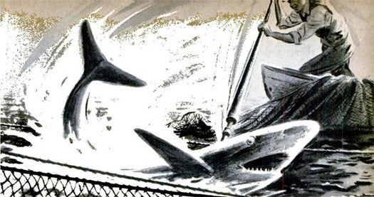 Archive Gallery: Man vs. Shark