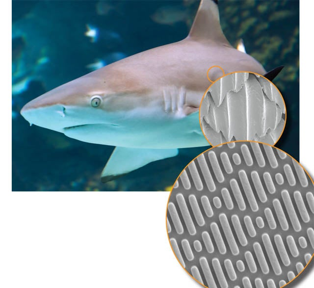 A Material Based on Sharkskin Stops Bacterial Breakouts