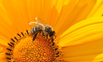 Bees deal with darkness the same way humans do