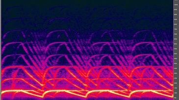 Spectrogram of a police siren