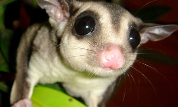"""Major Australian """"Bush Blitz"""" Initiative To Search Continent For Undiscovered Species"""