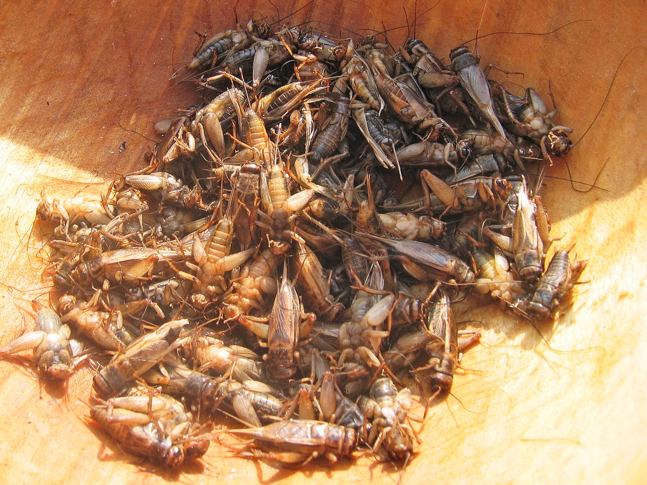 The Environmental Benefits Of Eating Crickets Vs. Chicken: It's Complicated