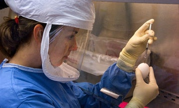 Flu Researchers Say: Let Us Get Back To Work Studying Risky Mutations