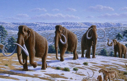 11-Year-Old Boy Makes Most Important Woolly Mammoth Discovery Of The Century