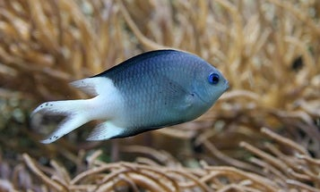 Exposure To CO2 Keeps Fish From Fleeing Danger