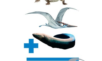 If Evolution Had Taken a Different Turn, Could Dragons Have Existed?