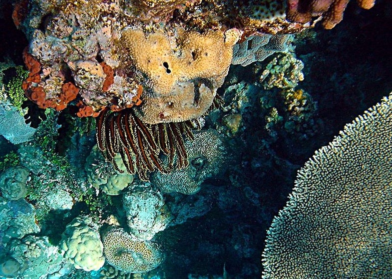 Coral Reefs in Troubled Waters