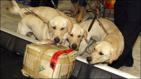 In Korea, Cloned Drug-Sniffing Dogs Report for Duty