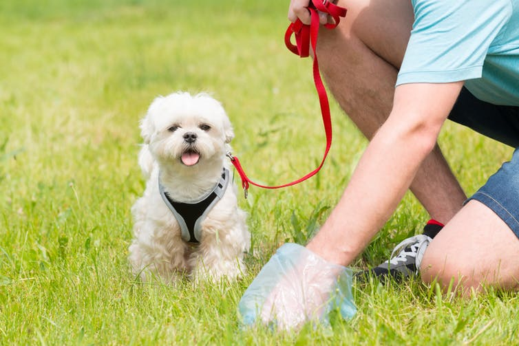 Not all dogs eat poop, but the ones that do like it fresh