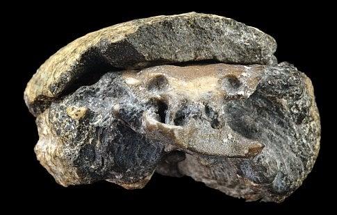 The 300-Million-Year-Old Brain