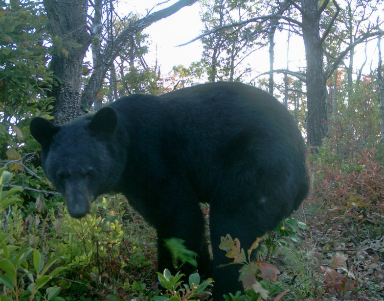 10 embarrassing animal photos captured by camera traps