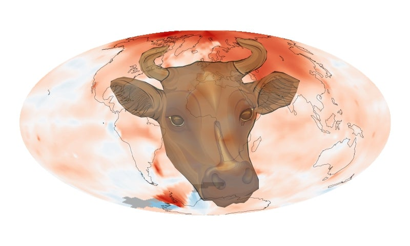 Ruminating Climate Change & the Criminal Cow