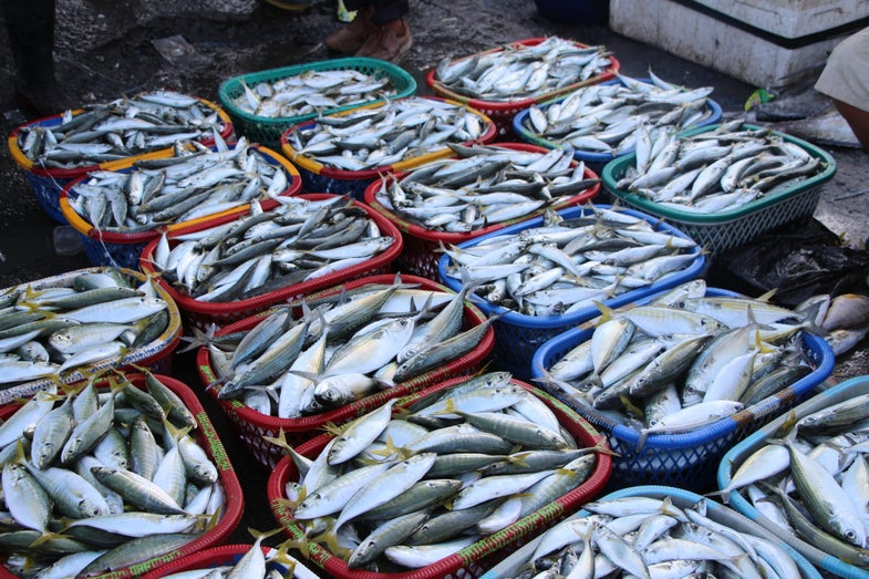Your Seafood Might Contain Tiny Plastic Particles