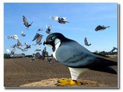 httpswww.popsci.comsitespopsci.comfilesimport2013importPopSciArticlespigeons_in_flight_opt_2.jpg