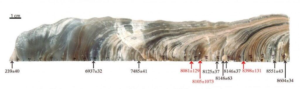 Stalagmite quarter section