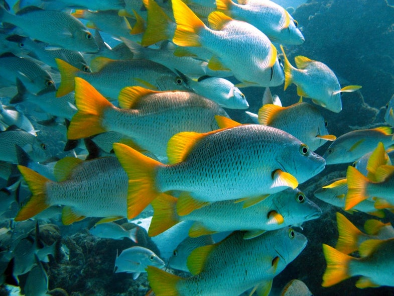 The secret of successful marine protected areas? People.