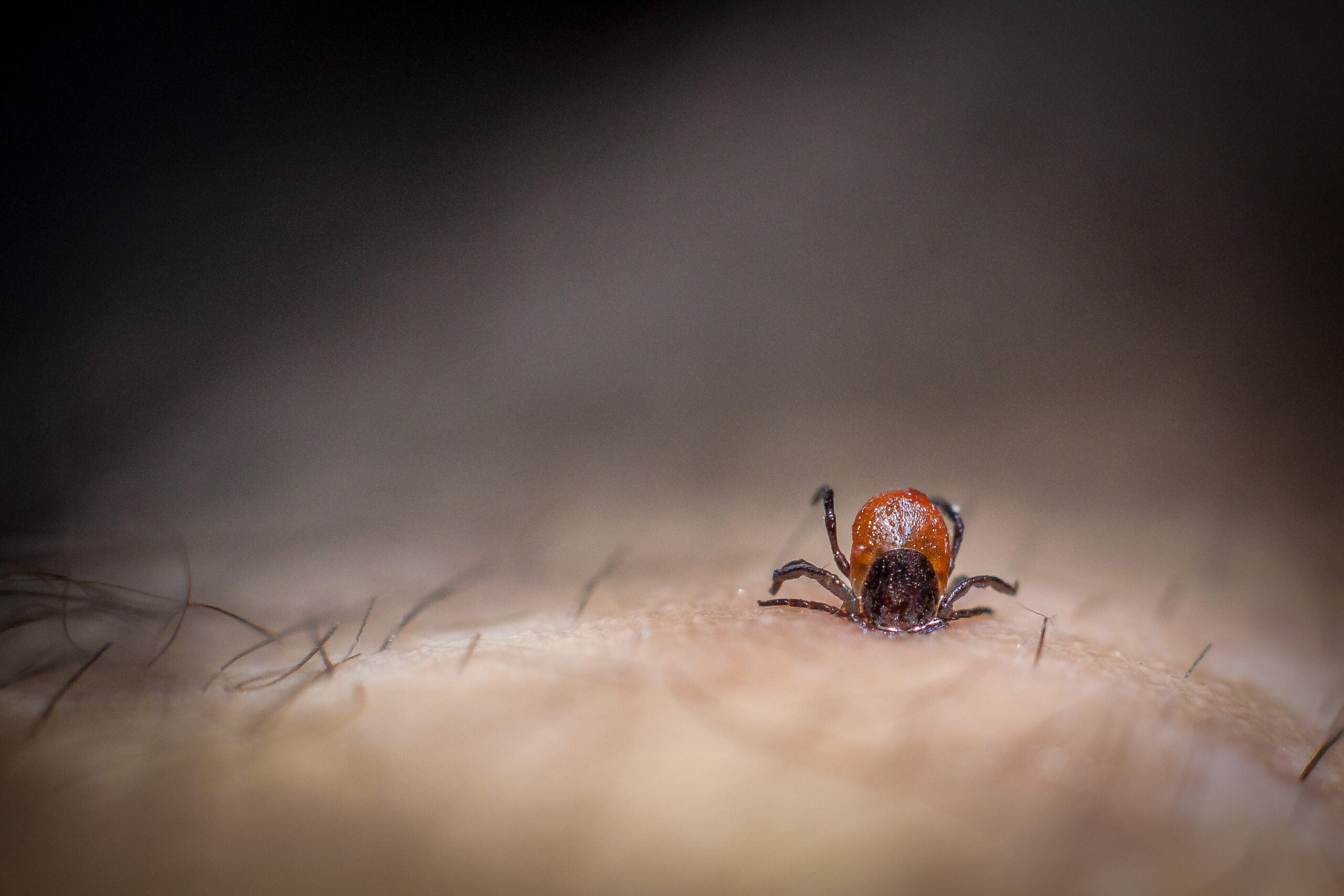 How Do You Know If You Have A Tickborne Illness?