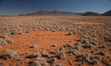 A new study explains the origin of mysterious 'fairy circles' in the desert
