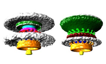 Bacteria Have 'Biological Wheels' That We Can Finally See In 3D