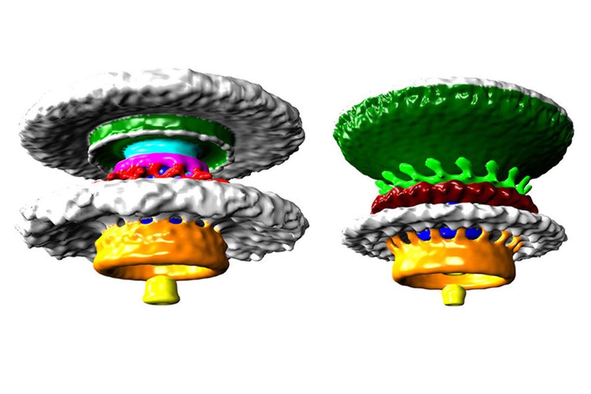 3D flagellum