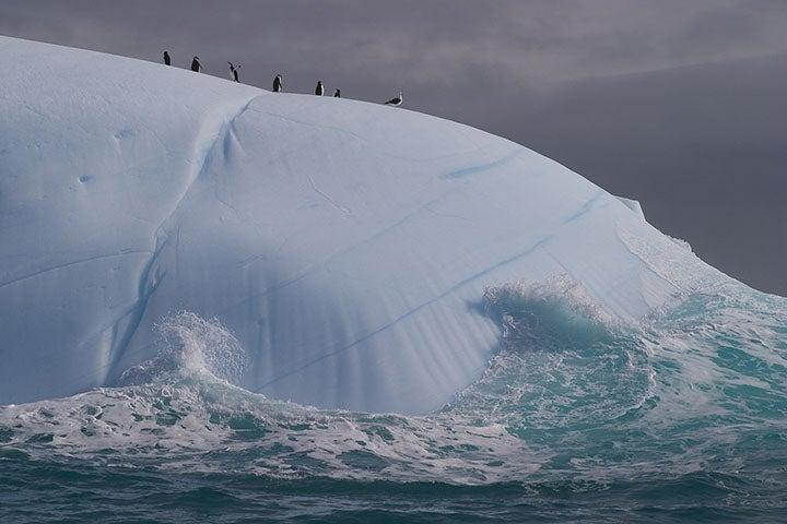 An iceberg in Antarctica's South Shetland Islands