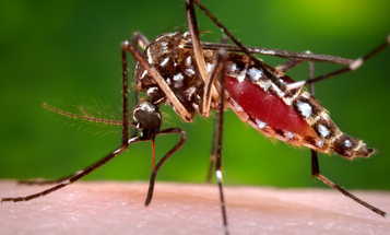 Zika Stays In Body Twice As Long As Previously Thought