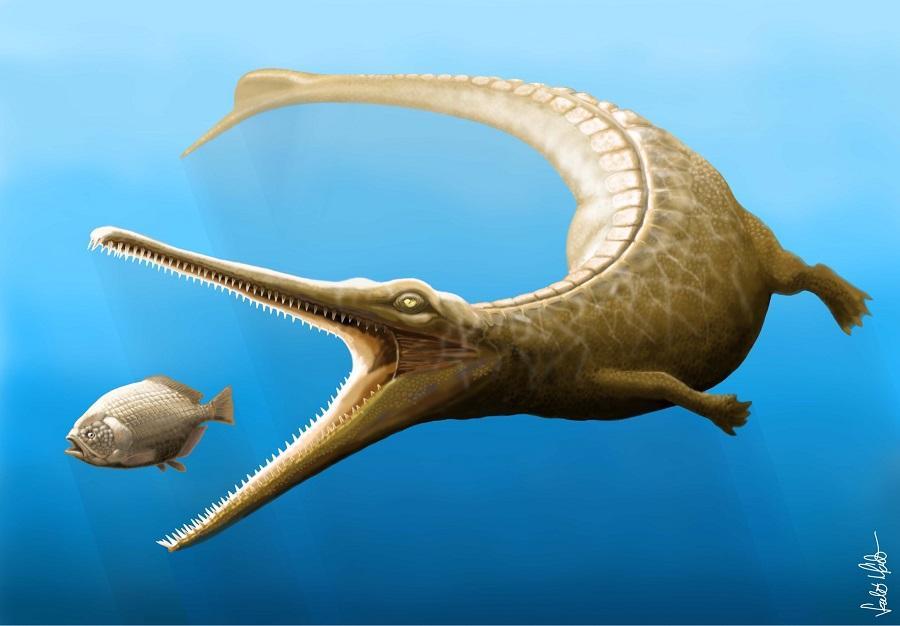 a crocodile with a fin