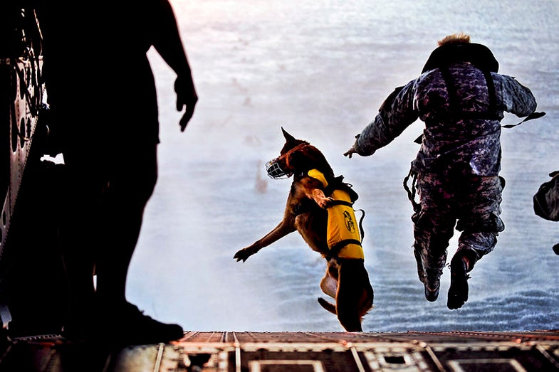DARPA Wants To Recruit Smarter Service Dogs By Scanning The Brains of Canine Job Candidates
