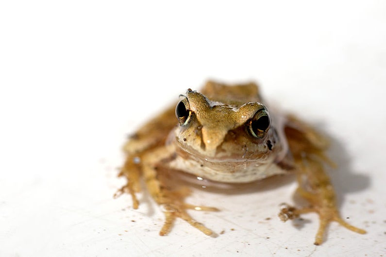 The Double Life Of A Frog-Loving Spy