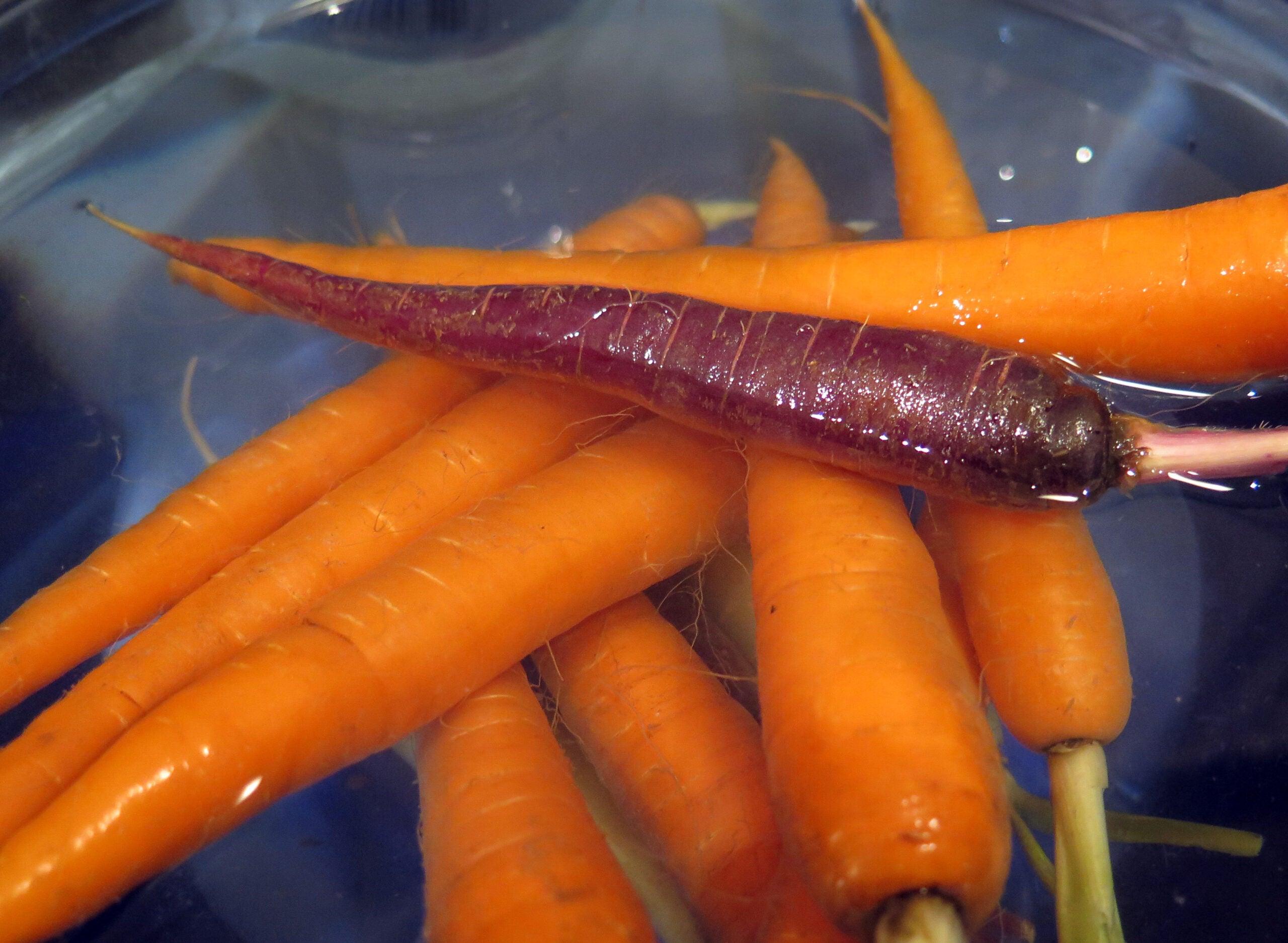 purple and orange carrots