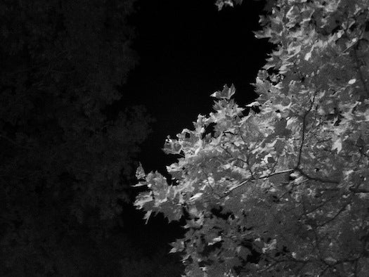 Midnight/Shot Review: A Pocket-Sized Infrared Camera