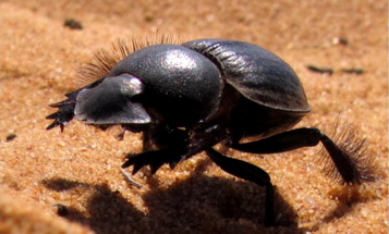 The World's Only Galloping Insect Runs Like A Race Horse In Slow-Mo