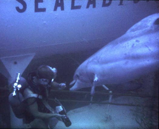 U.S. Navy To Retire Mine-Sweeping Dolphins And Use Robots Instead