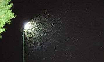 Who Loves LED Lights? The Nobel Committee — And Flying Insects