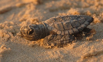 It's World Turtle Day, so here are a bunch of adorable turtles