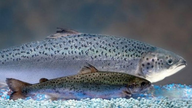 Genetically Modified Salmon Gets FDA Approval