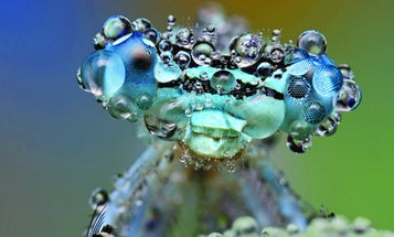 Megapixels: A Dew-Covered Damselfly