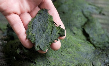 In New System, Algae Cleans Water, Then Transforms into Organic Fertilizer