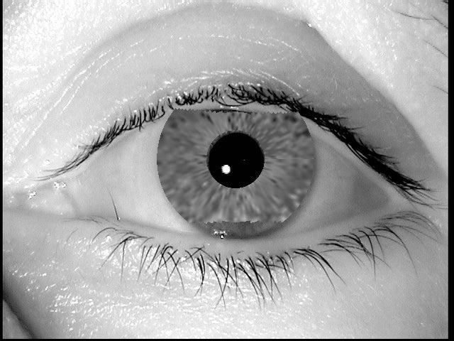 Digital Iris Fakes Made with Evolving Algorithm Fool Biometric Scanners