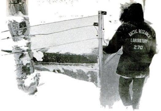 Archive Gallery: PopSci's Arctic Adventures