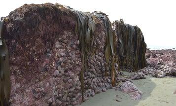 New Zealand earthquake lifts a bizarre sea wall up to land