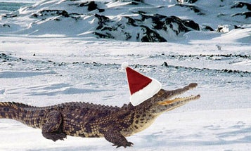 Crocodile-like Reptiles Lived in the Arctic 55 Million Years Ago. Could it Happen Again?